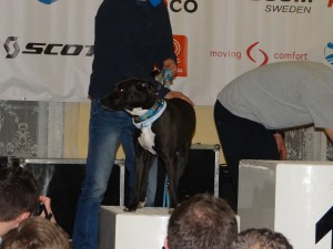 ZUK 2015 Negra na podium