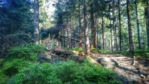 maraton górski lesnik