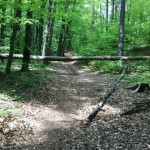 Trail Running Sopot ścieżka obok Łysej Góry