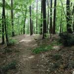 Trail Running Sopot leśna ścieżka