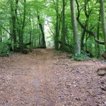 Trail Running Sopot podbieg pod Zajęcze Wzgórze